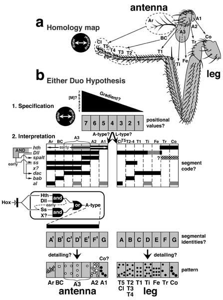 lewis wolpert developmental biology pdf