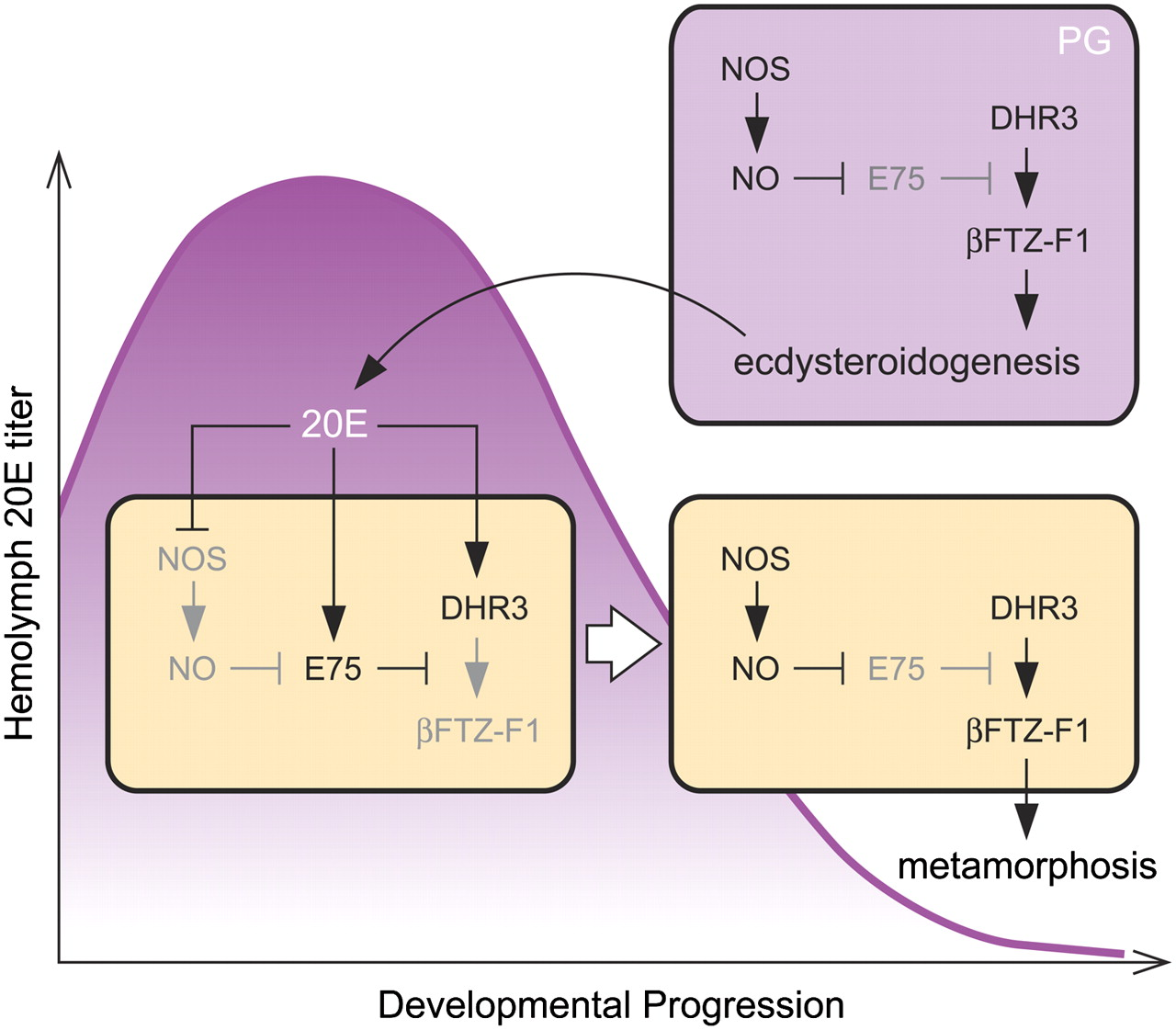 O Connor Gmc >> Developmental Pathways